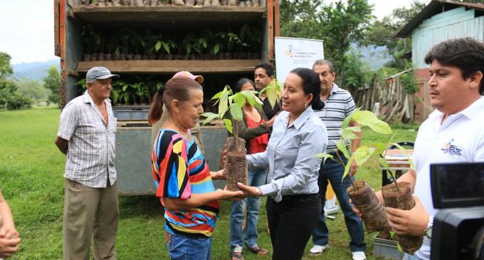 Habitantes de El Saltadero con 12 mil plántulas de cacao nacional