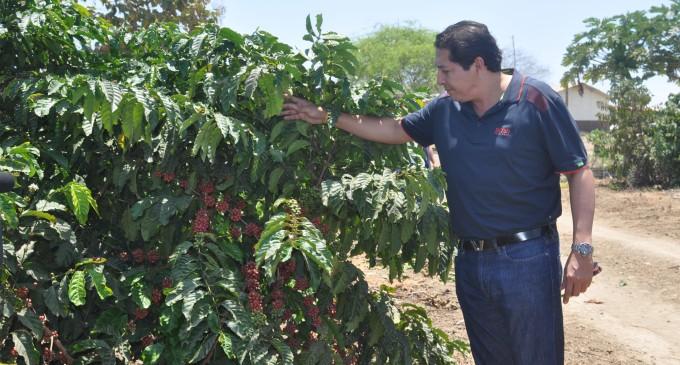 Provincia de Los Ríos quiere reivindicar su potencial cafetalero