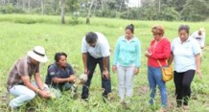 En Valencia cosechan sandías y melones con asesoría de Prefectura y Alcaldía