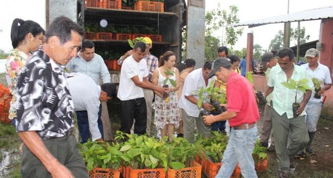 28.000 plantas de cacao para agricultores de Mocache y Valencia