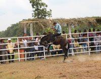 Solicitan declarar Patrimonio Nacional al Rodeo Montubio