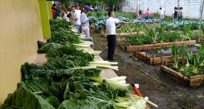 Jóvenes Especiales de la Dirección de Desarrollo  Social cosecharon hortalizas