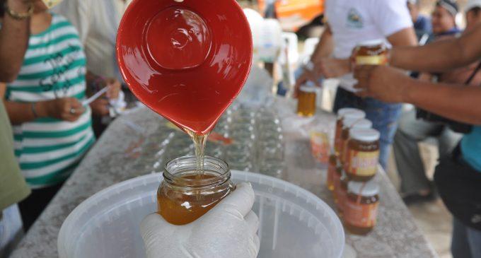 Puebloviejo: campesinos de San Juan recolectan miel de abejas