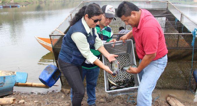 15 mil peces 'vieja azul' fueron liberados para su reproducción