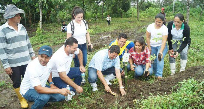 Valencia. Campaña de reforestación