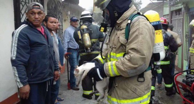 Rrescatan dos ancianos y 12 gatos en incendio