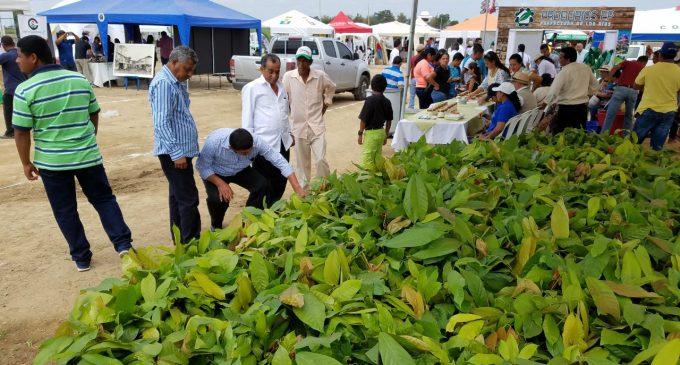 IV Feria del Cacao