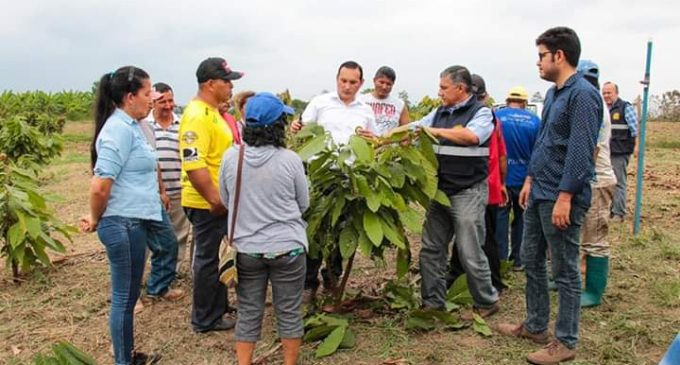 1619 agricultores beneficiados con proyecto de siembra de cacao