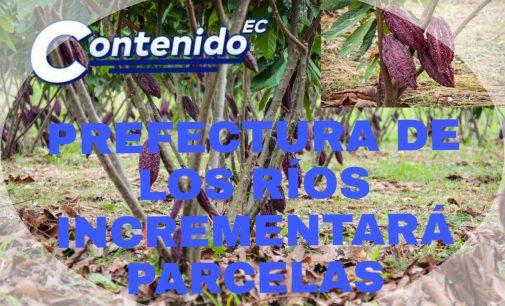 PREFECTURA DE LOS RÍOS IMPULSARÁ PARCERAS PARA INCREMENTAR PRODUCCIÓN CACAOTERA